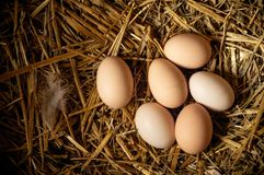 Farm scene, group eggs on straw, feathers, Eggs high protein, healthy food, good lifestyle. Happy Easter concept. With copy space stock images