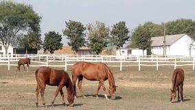 Farm scene horses eating Stock Images