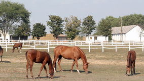 Farm scene horses eating stock footage