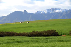 Farm Scene In The Overberg - South Africa Royalty Free Stock Photos