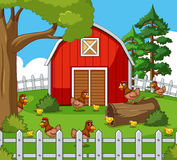 Farm scene with many hens and chicks Royalty Free Stock Photography