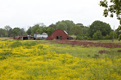 Farm scene with red barn and yellow weeds Stock Photos