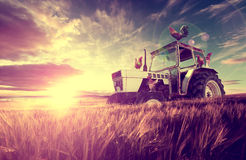 Farm scenery and sunset wheat fields Royalty Free Stock Images