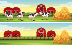 Farm scenes with cows and barns Stock Images