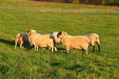 Farm05 Royalty Free Stock Photography
