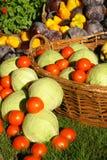 Farm seasonal vegetable royalty free stock photography