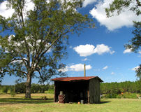 Farm Shed. Shed on Pecan Farm in Florida Stock Photography