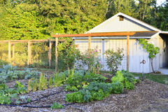 Farm shed with garden bed Stock Photos