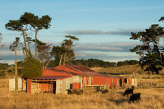 Farm Shed Stock Photo