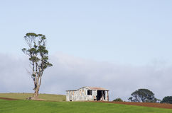 Farm shed and tree, Tasmania, Australia Royalty Free Stock Images