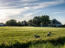 Farm with sheep's. View of a farm in the evening stock photo