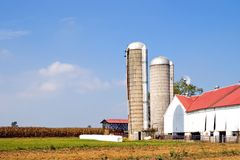 Farm and silos. Amish farm in Lancaster, Pennsylvania with white tobacco barn, silos and cornfield in the background on an early fall afternoon Royalty Free Stock Photos