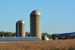 Farm Silos. Farm site and soybean field ready for harvest Royalty Free Stock Image