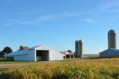 Farm Site. With a blue sky and soybean field Royalty Free Stock Photography
