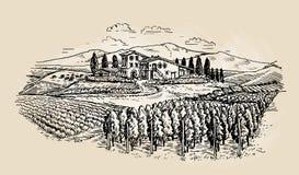 Farm sketch. Rural landscape with vineyard. Vector illustration Royalty Free Stock Photo