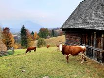 Farm in Sohodol in Brasov county in Romania royalty free stock images
