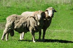 Farm South Island New Zealand Stock Photos