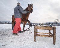 Farm staff prepare horse for hooves clearing by backsmith. Regular horse farm care working stuff worker wooden box woman winter season warm clothes village stock photo