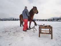 Farm staff prepare horse for hooves clearing by backsmith. Regular horse farm care working stuff worker wooden box woman winter season warm clothes village royalty free stock photo