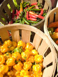 Farm Stand. Baskets of colorful peppers at a farm stand Stock Photography
