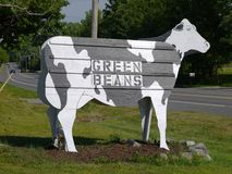 Farm-stand: cow sign beans. New England farm-stand cow sign advertising fresh vegetables Stock Image