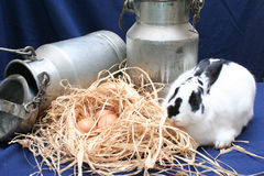 Farm Still Life. Rabbit, eggs and milking cans Stock Photo