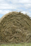 Farm Straw. A big bale of hey on a field at a farm Stock Photos