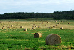 Farm with straw piles Stock Image