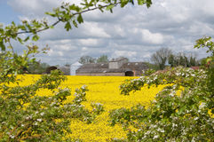 Farm in suffolk UK Royalty Free Stock Photo