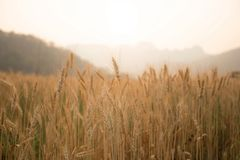 Farm and the sun Royalty Free Stock Photography