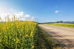 Farm Sunhemp flowers. Stock Images