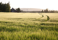 A farm on a sunny afternoon. Landscape shot of a farm on a sunny afternoon Royalty Free Stock Image