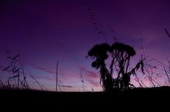 Farm Sunrise. Purple Landscape stock photography