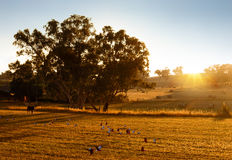Farm Sunset Landscape Stock Photography