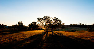 Farm Sunset Shadows Stock Photography