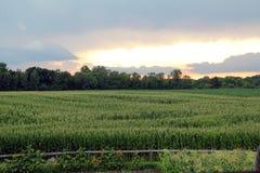 Farm Sunset with Sunflowers stock photos