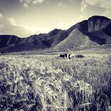 Farm. The farm in sunshine in Tibet Royalty Free Stock Images