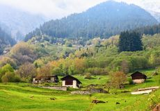 Farm   in the Swiss alps,  Valais, Switzerland Stock Image