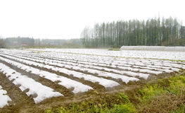 Farm tent. Chinese farm tent in the field after rain in spring Royalty Free Stock Photo