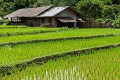 Farm and terrace rice field Stock Image