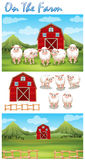 Farm theme with sheeps on the farm Royalty Free Stock Image
