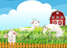 A farm with three goats Royalty Free Stock Photography
