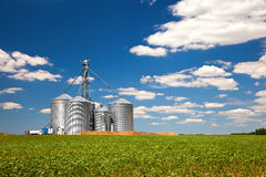 Farm tin silos storage towers in greenw crops view Royalty Free Stock Photo