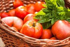 Farm tomatoes Stock Photos