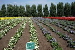 Farm Tomita Stock Images