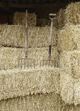 Farm tools. Two rakes in a pile of straw, farm tools Stock Photography