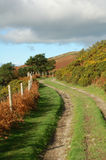 Farm Track in The Autumn. A winding farm track in the autumn surrounded by fence trees and ferns Stock Photos