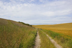 Farm track and barley fields Royalty Free Stock Image