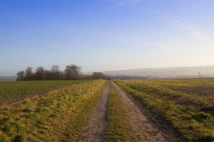 Farm track and copse Stock Photography