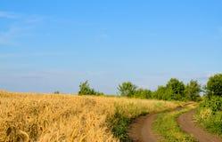 Farm track through a golden wheat field Stock Photos